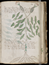 The VOYNICH MANUSCRIPT: The Mysterious Code that has Defied Interpretation for Centuries  -